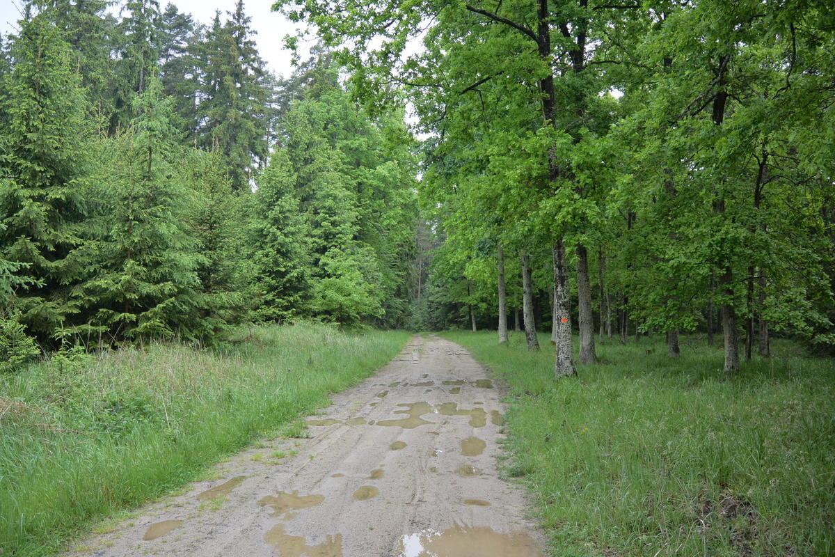 Mud roads