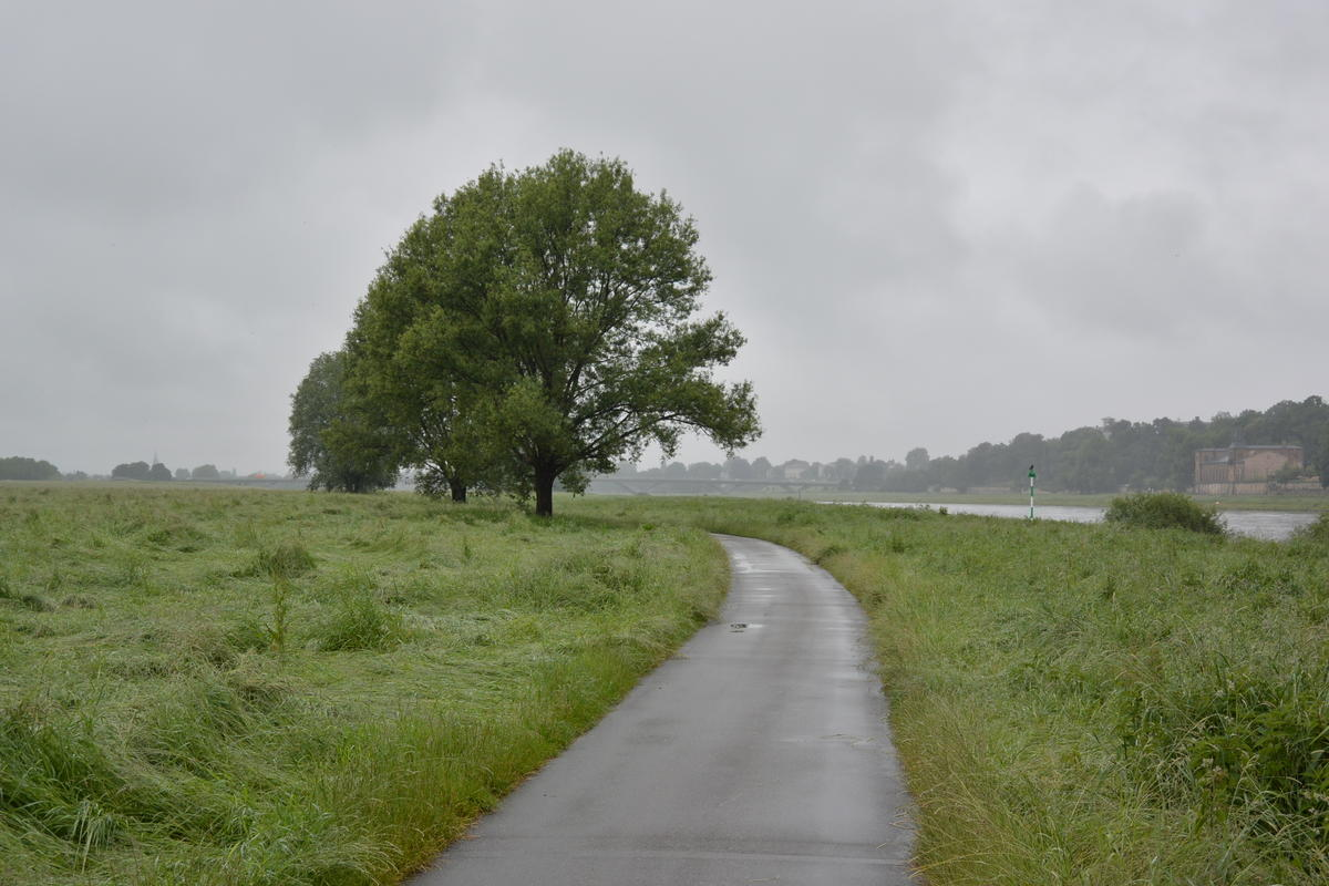 Bike road long Elbe