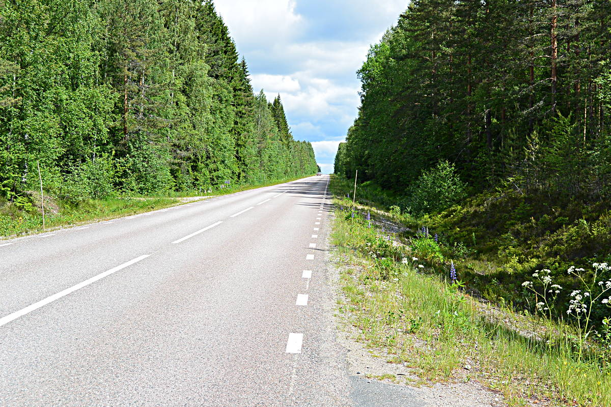 more road, more traffic