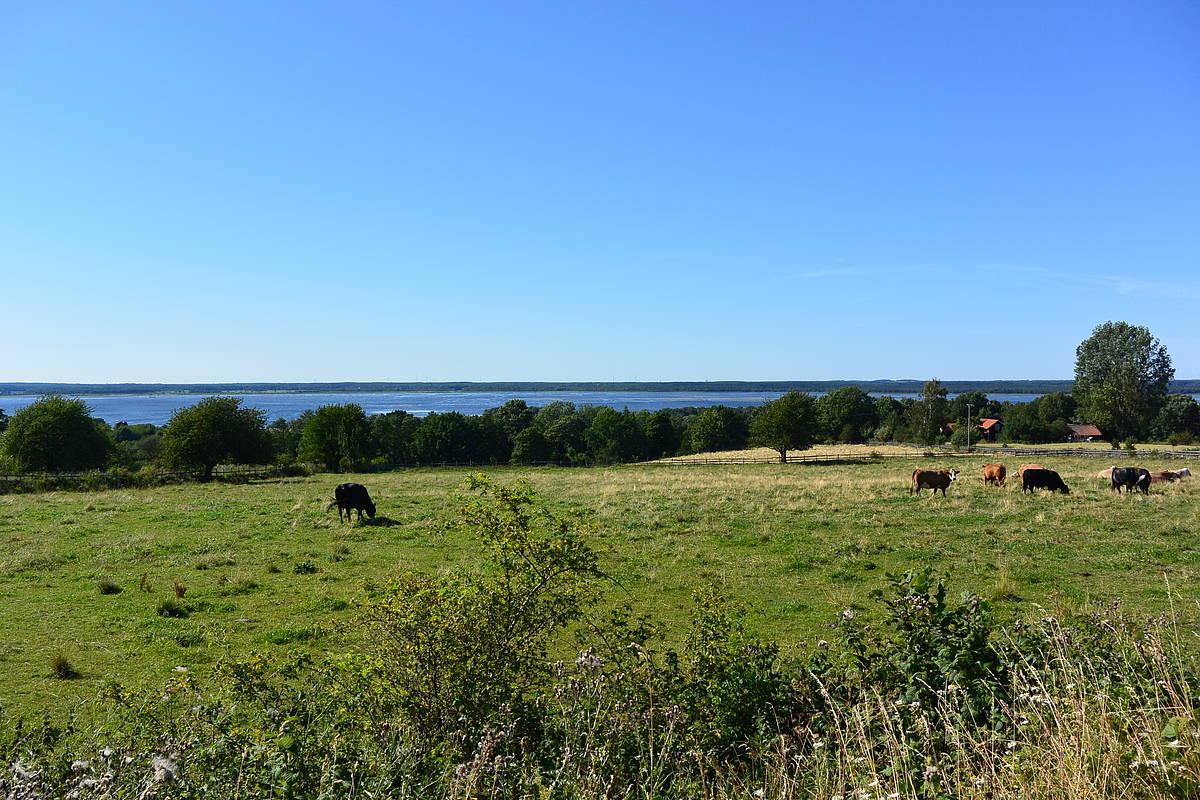 Lake Hornborgasjön
